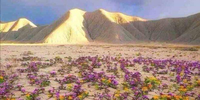 The desert of the Atacama Chile - Photography