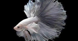 Amazing Best Fish