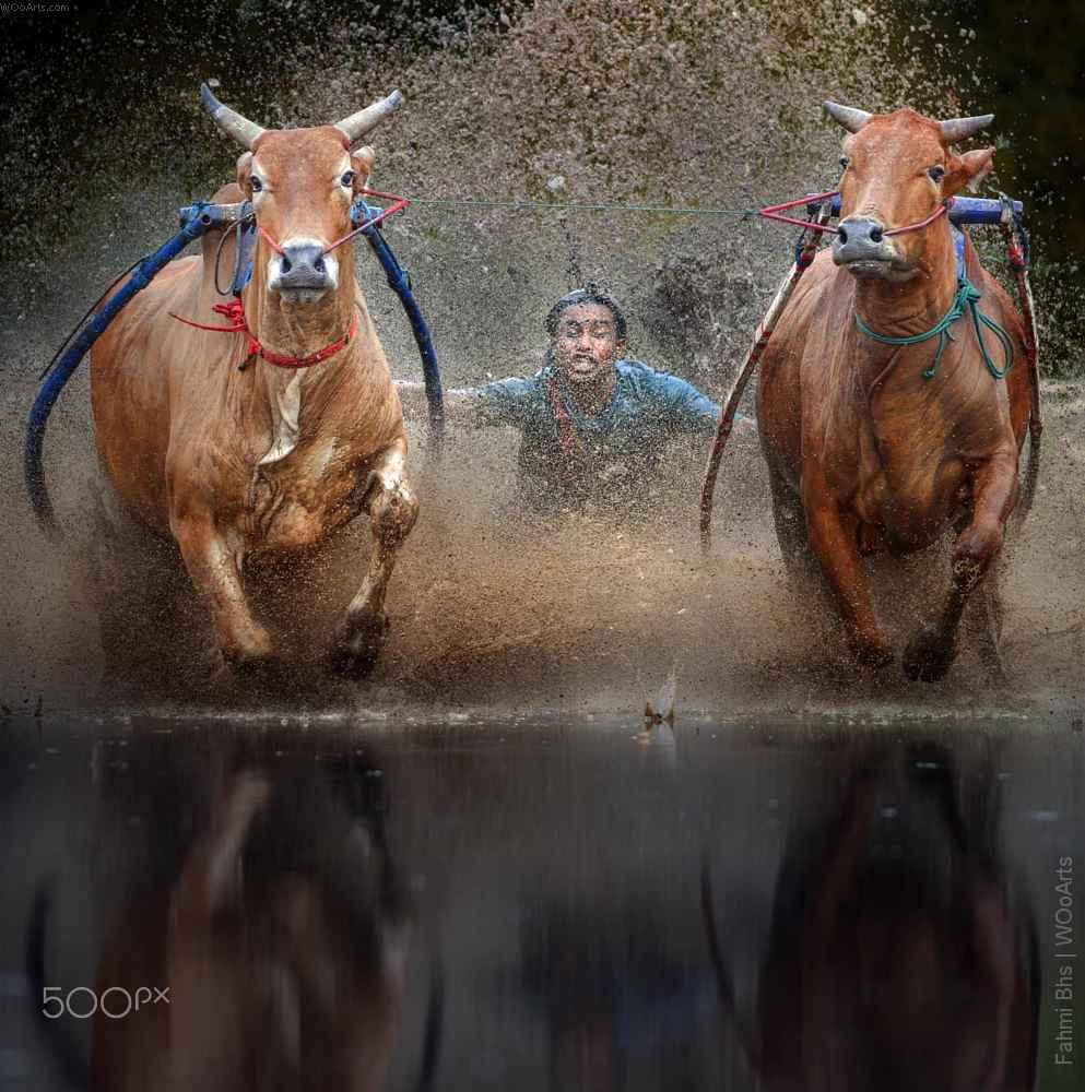 fahmi-bhs-photography-wooarts-com-00