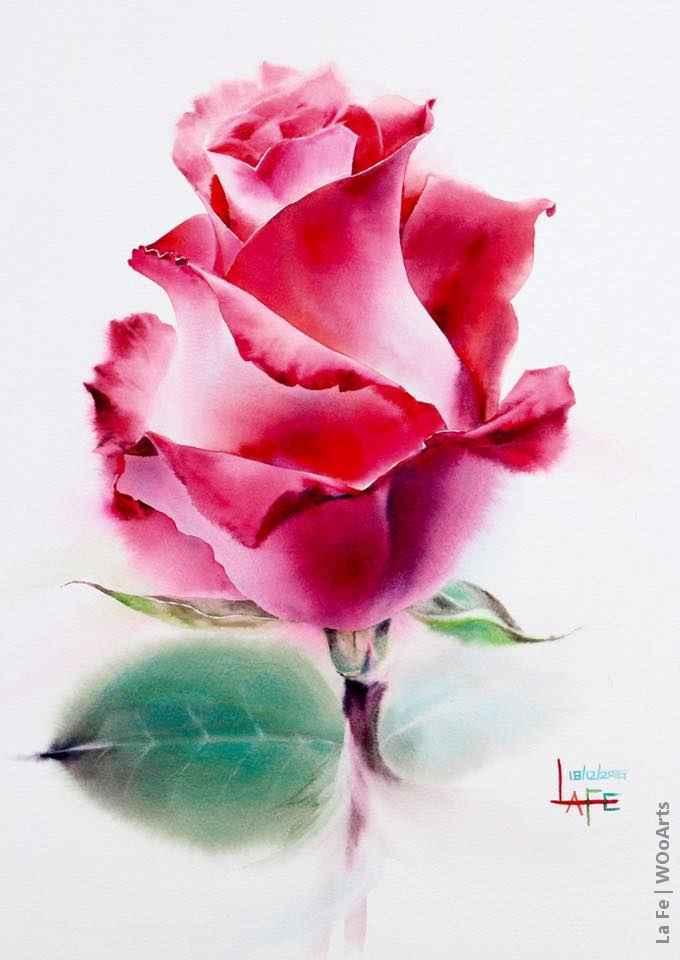 41 Roses Watercolor Paintings By Thai Artist La Fe